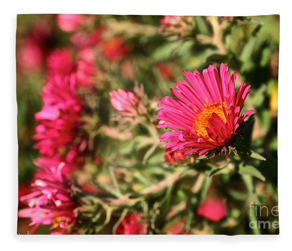 Flower Fleece Blanket featuring the photograph Happy Aster by Susan Herber