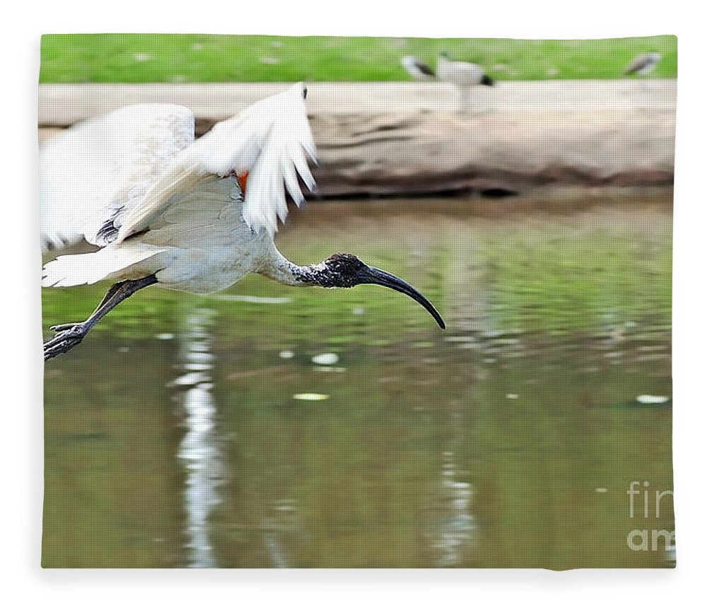 Photography Fleece Blanket featuring the photograph Ibis In Flight by Kaye Menner