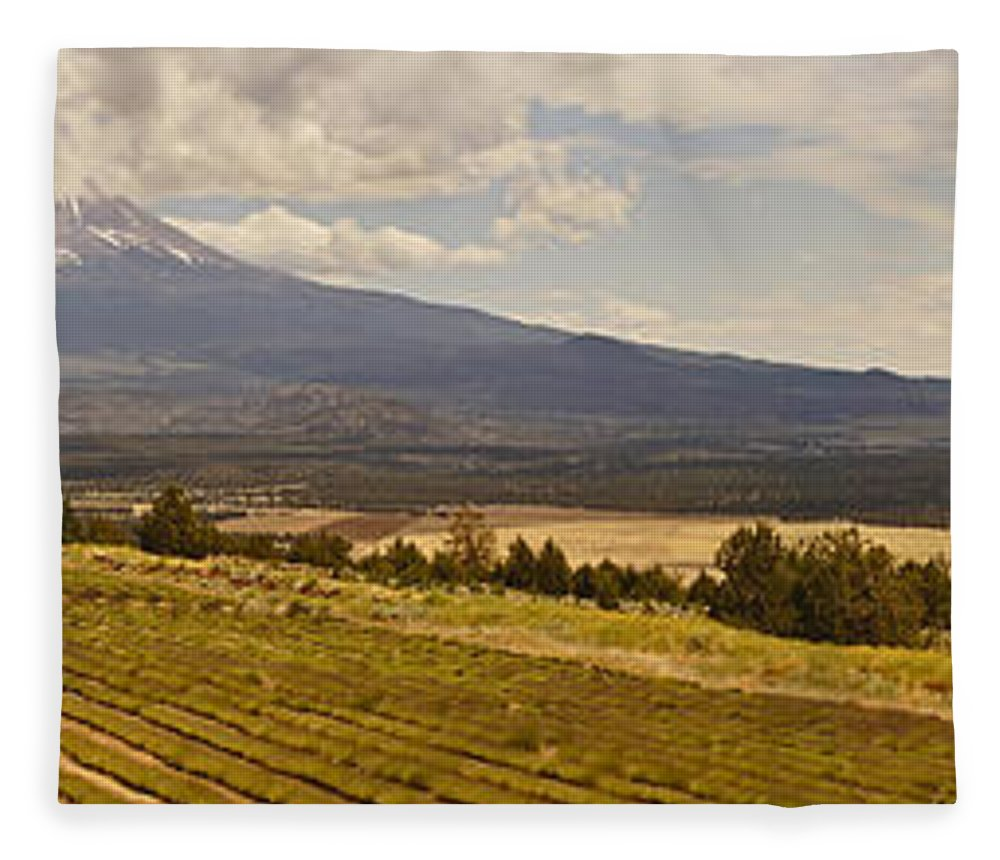 Panorama Fleece Blanket featuring the photograph Lavender Farm Panorama by Mick Anderson