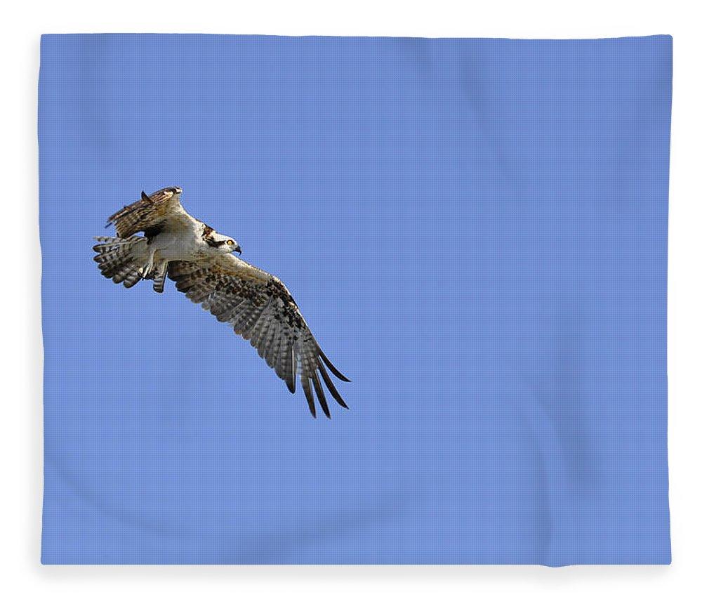 Osprey Fleece Blanket featuring the photograph Osprey in Flight by Christine Stonebridge