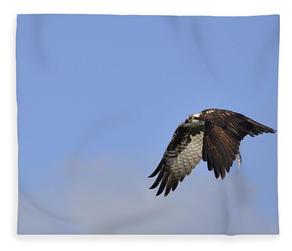 Osprey Fleece Blanket featuring the photograph Osprey On The Move by Christine Stonebridge