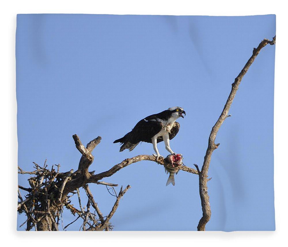 Osprey Fleece Blanket featuring the photograph Osprey with Catch I by Christine Stonebridge