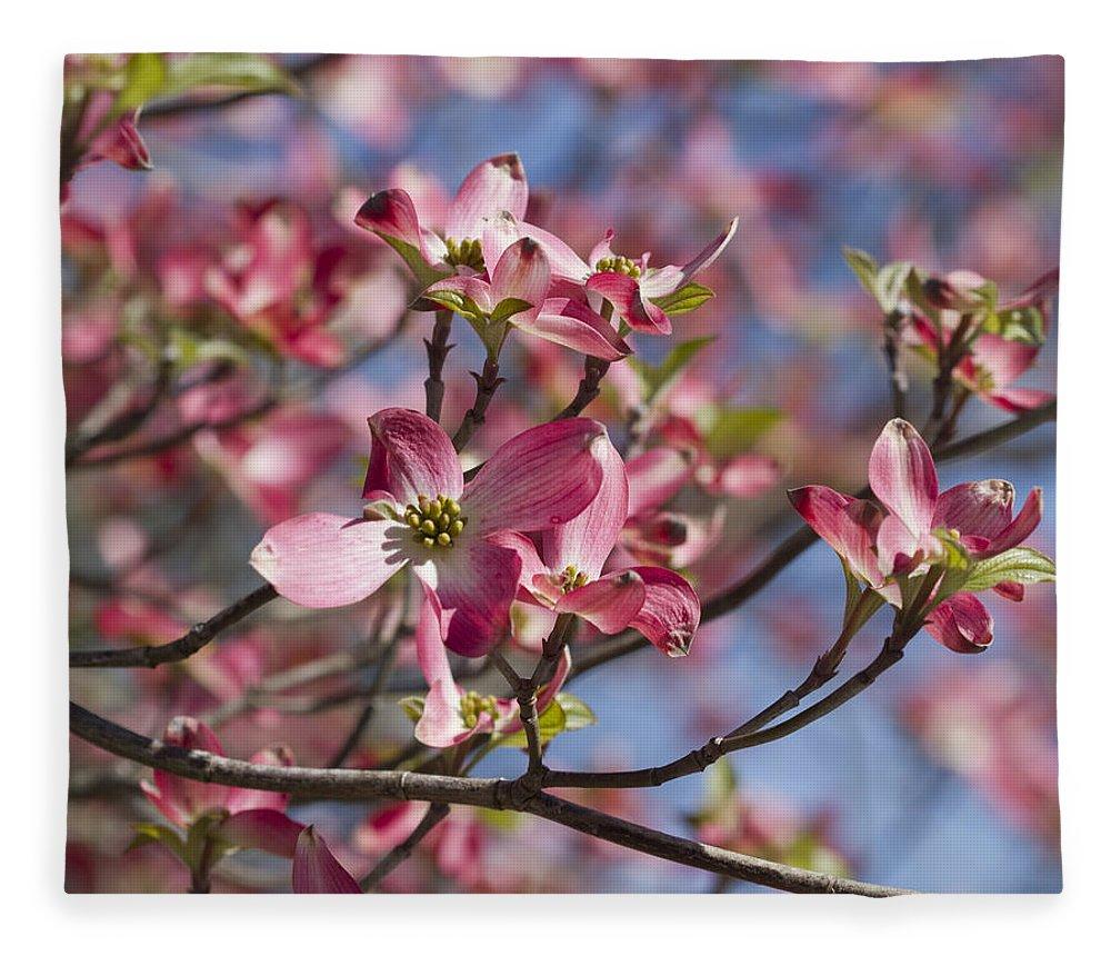 Pink Flowering Dogwood Tree Cornus Florida Fleece Blanket For Sale