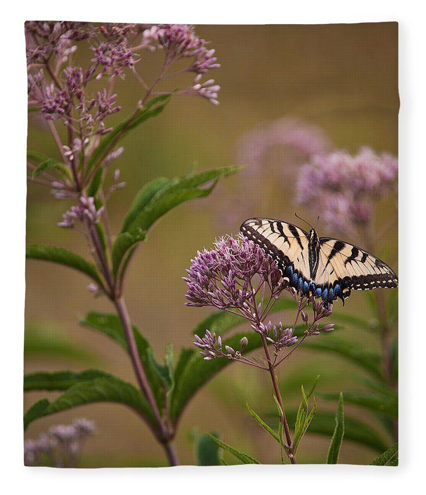 Butterfly Fleece Blanket featuring the photograph Poised by Dale Kincaid