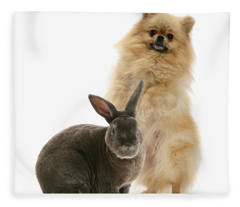 Pomeranian Fleece Blanket featuring the photograph Pomeranian And Blue Rex Rabbit by Jane Burton