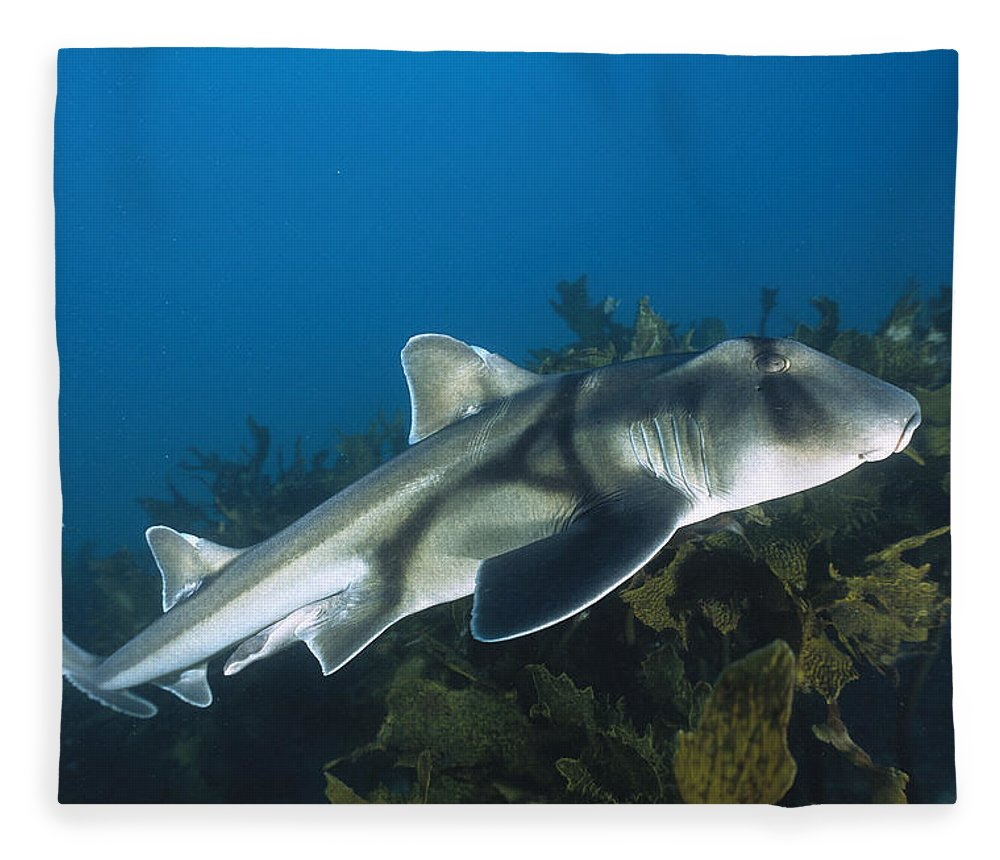 Mp Fleece Blanket featuring the photograph Port Jackson Shark by Mike Parry