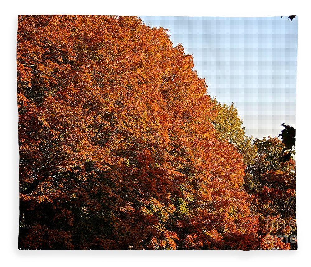 Outdoors Fleece Blanket featuring the photograph Sugar Maple by Susan Herber