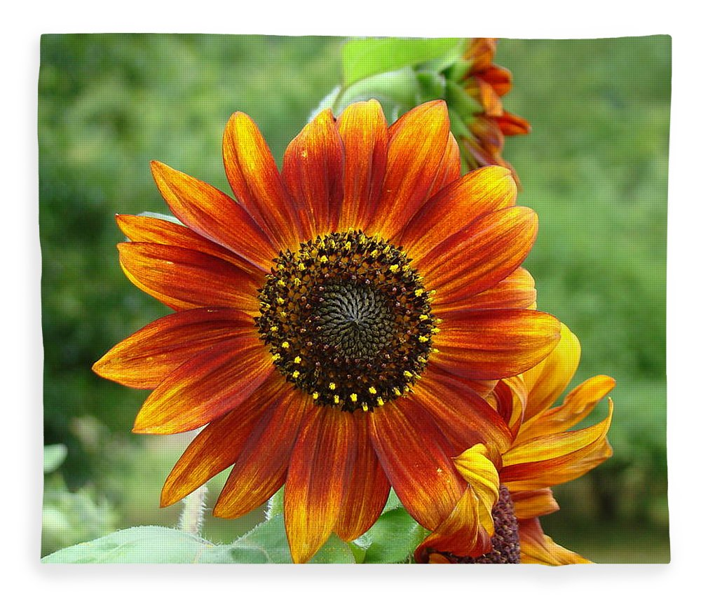 Red Sunflower Fleece Blanket featuring the photograph Sunflower by Lisa Rose Musselwhite
