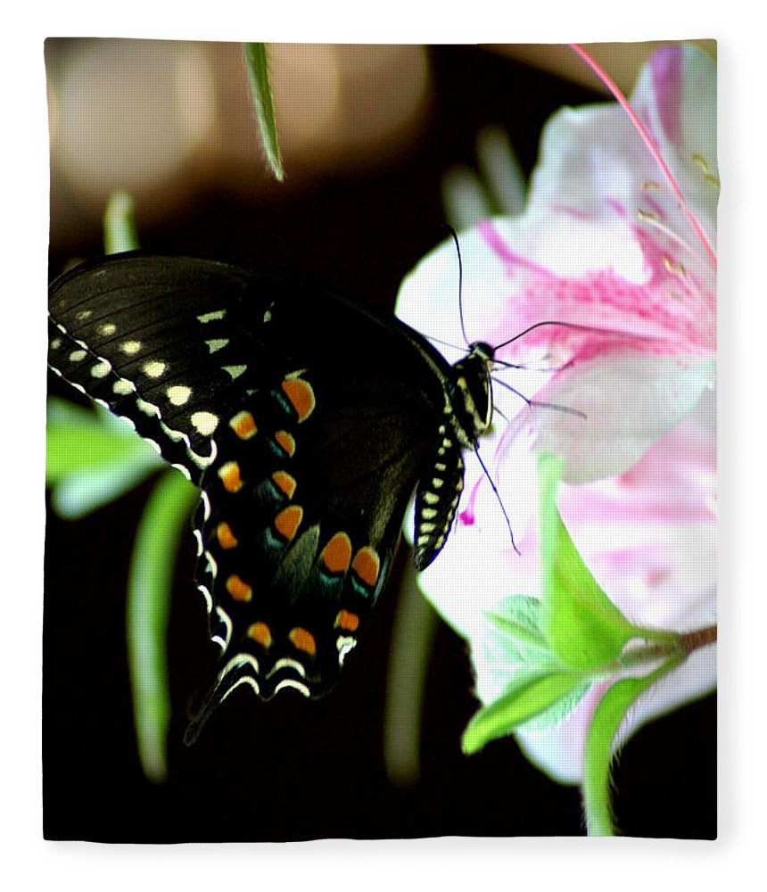 Swallowtail Fleece Blanket featuring the photograph Swallowtail by David Weeks