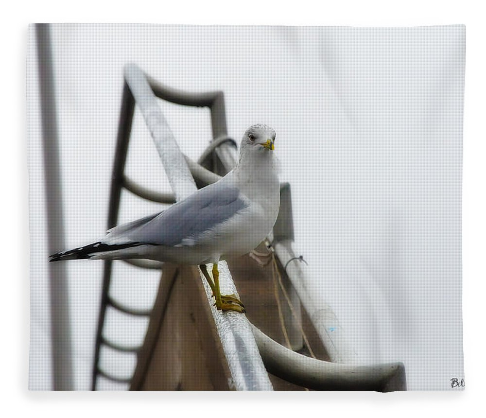 The Seagull Fleece Blanket featuring the photograph The Seagull by Bill Cannon