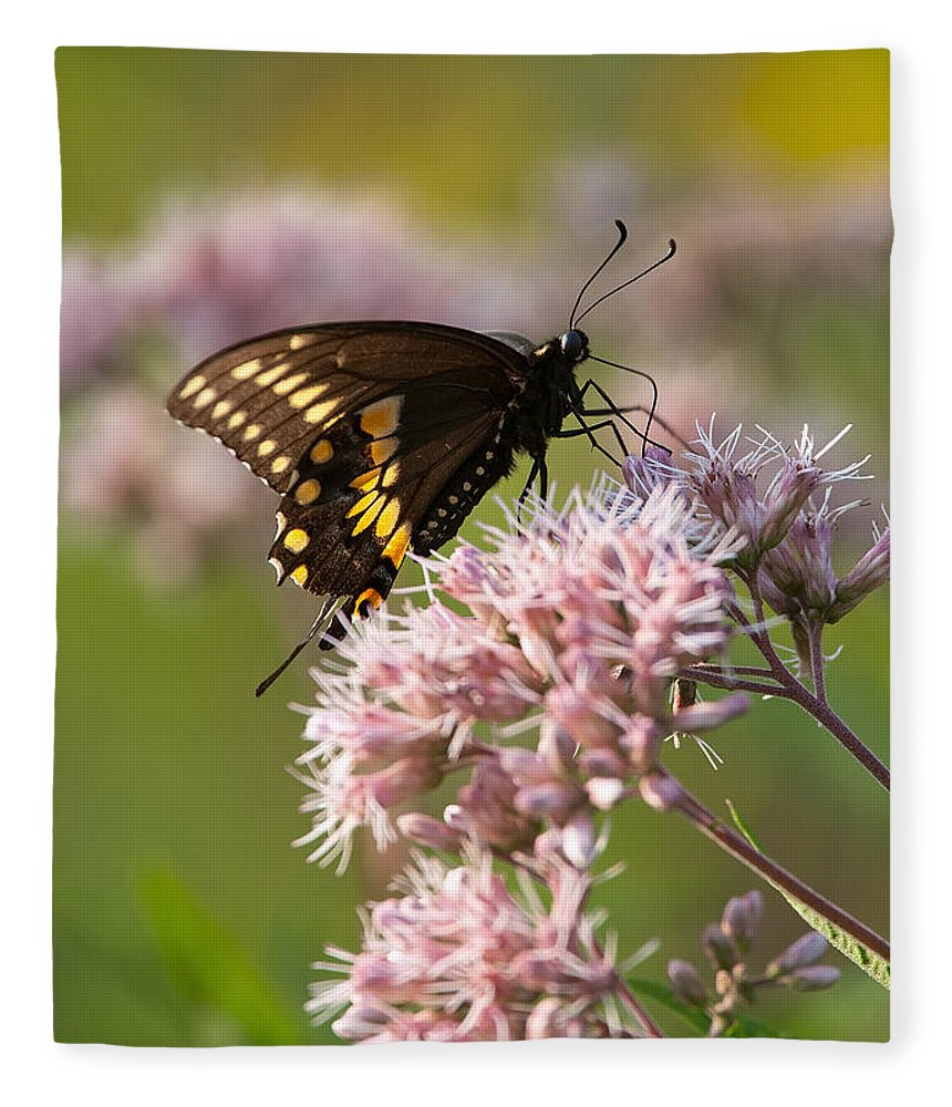 Butterfly Fleece Blanket featuring the photograph Victuals by Dale Kincaid