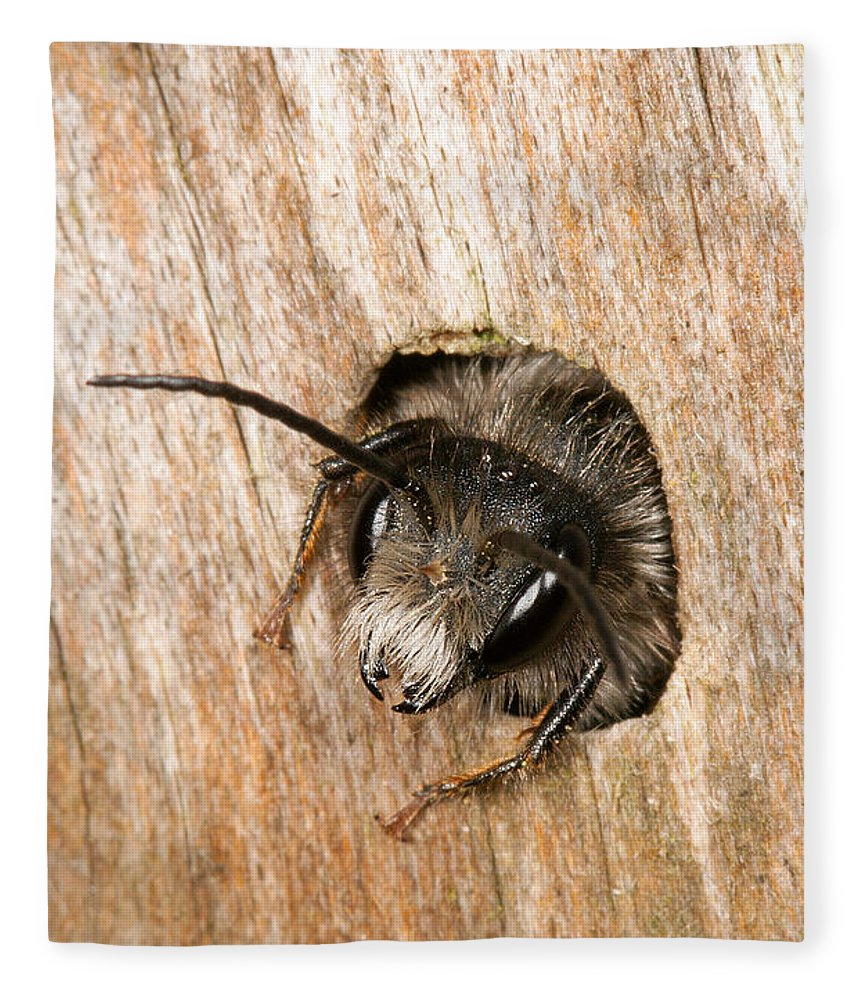 Andrena Fleece Blanket featuring the photograph Who Goes There by Bob Kemp