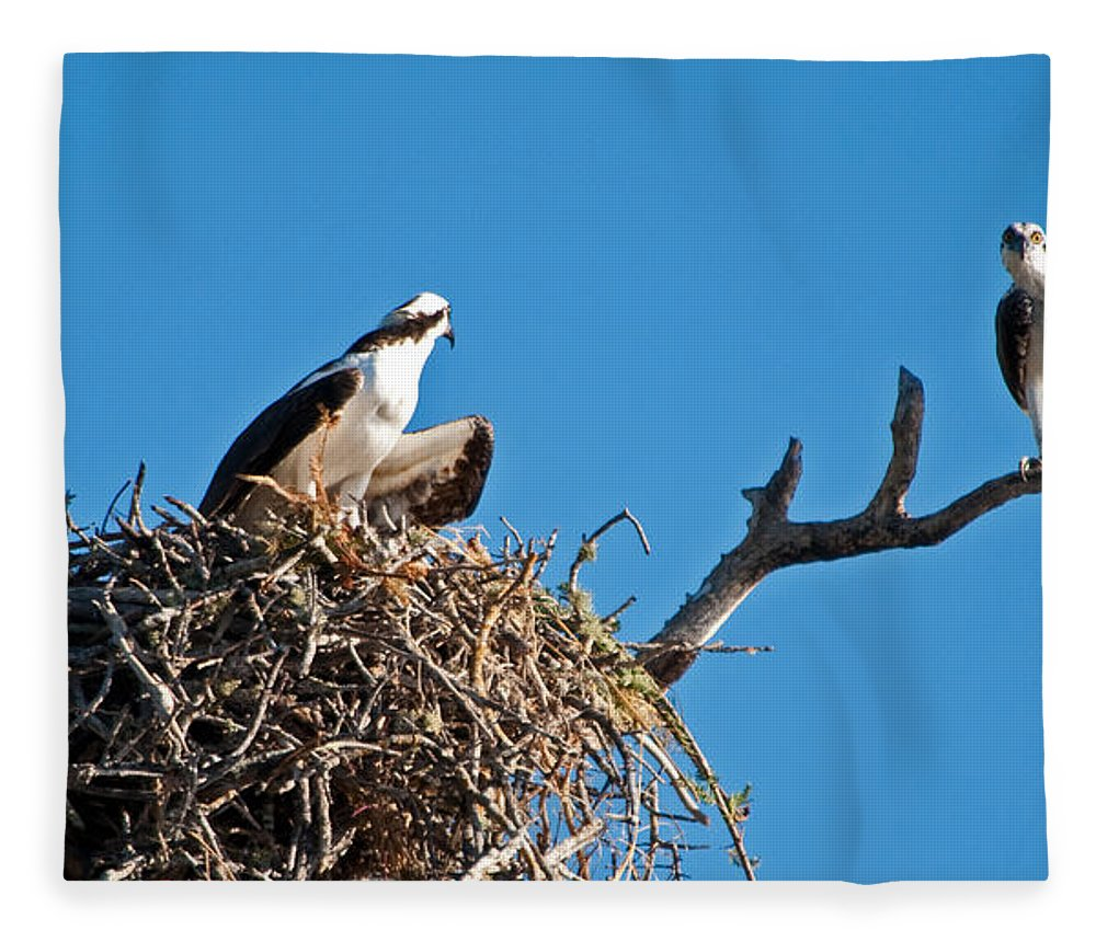 Osprey Fleece Blanket featuring the photograph You Lookin At Me by Christine Stonebridge