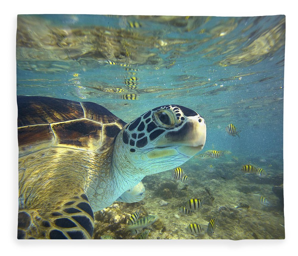 00451417 Fleece Blanket featuring the photograph Green Sea Turtle Balicasag Island by Tim Fitzharris