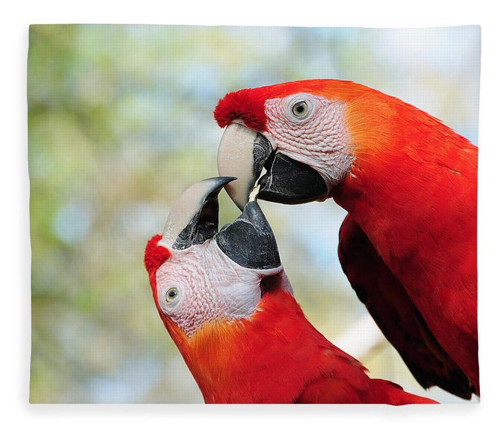 Bird Fleece Blanket featuring the photograph Macaws by Steven Sparks