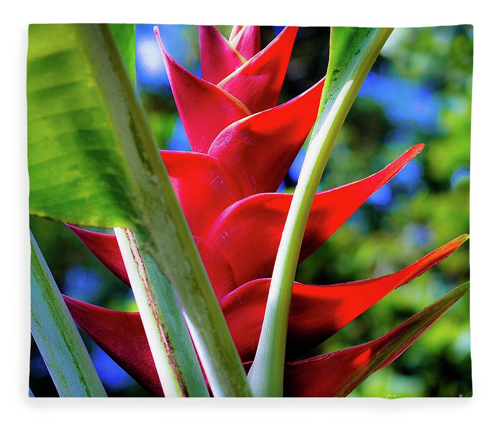 Red Fleece Blanket featuring the photograph Red Heliconia Hawaii by D Davila
