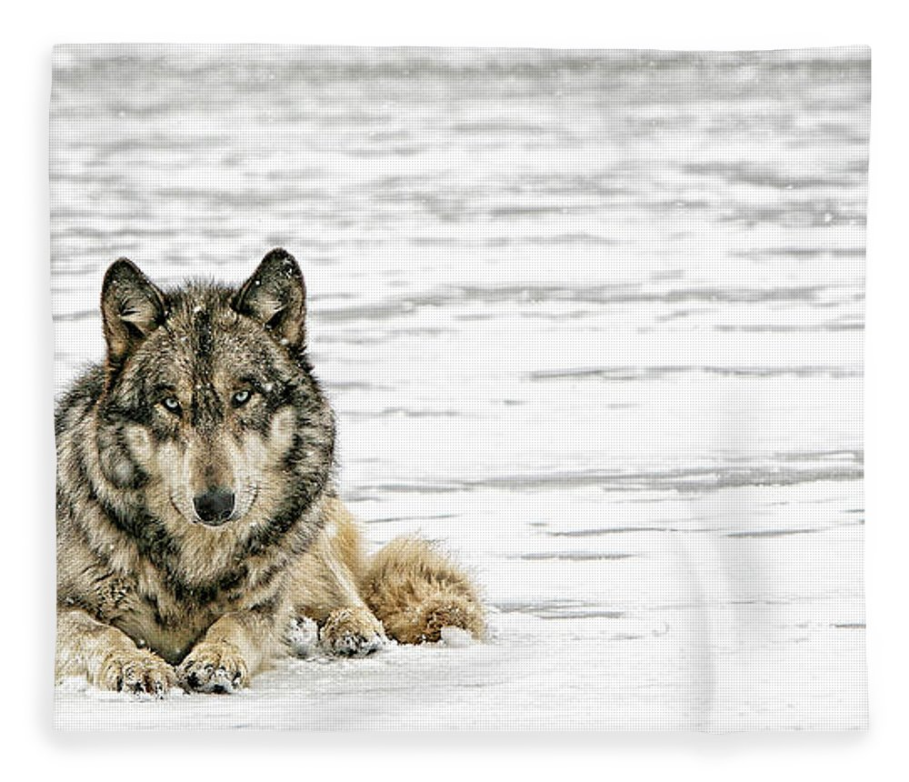 Wolf Fleece Blanket featuring the photograph Relaxed by Shari Jardina