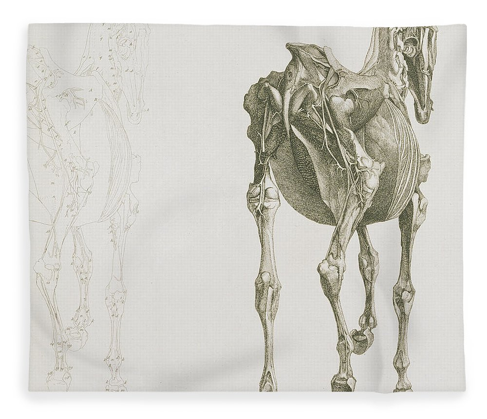 The Anatomy Of The Horse Fleece Blanket for Sale by George Stubbs