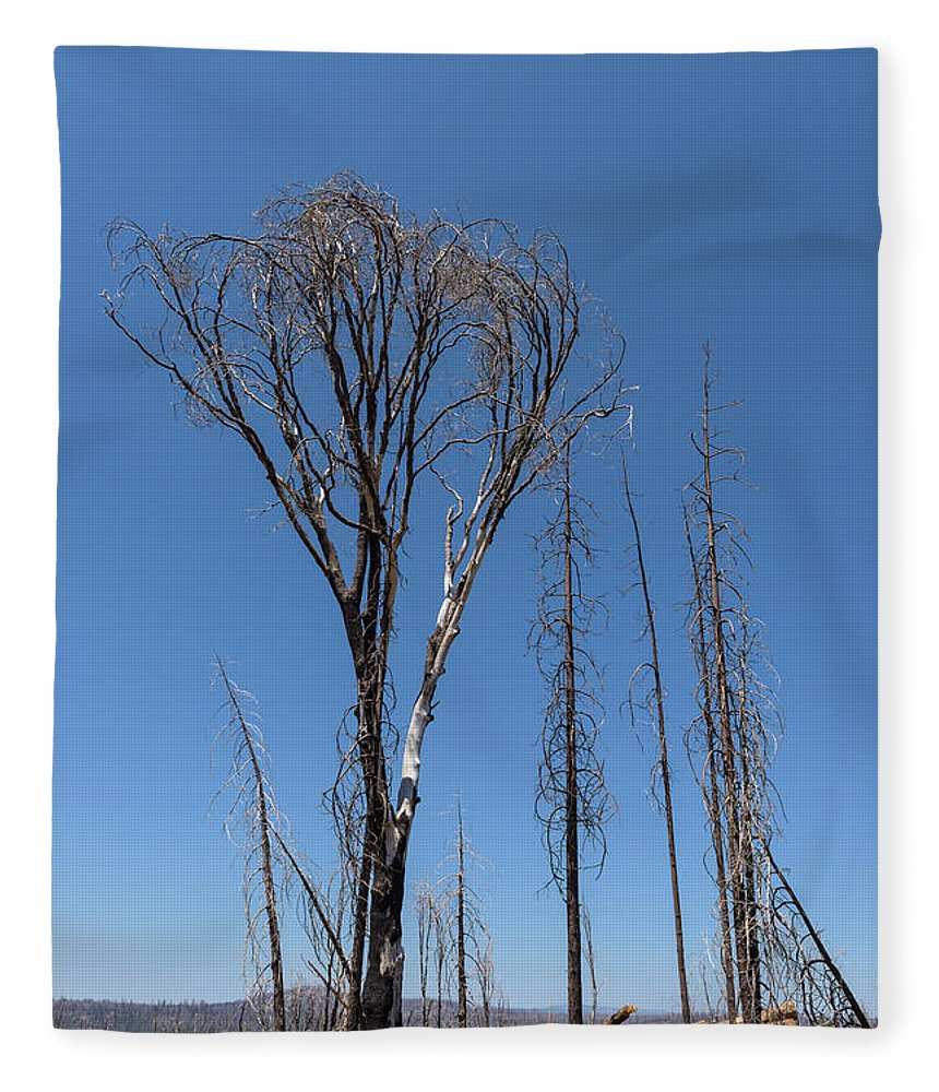 California Fleece Blanket featuring the photograph Trees Destroyed By Fire by Jim Thompson