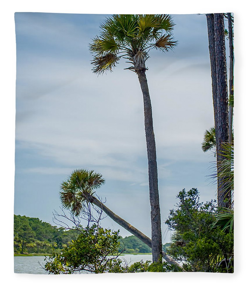 Beaufort Fleece Blanket featuring the photograph Palmetto Forest On Hunting Island Beach by Alex Grichenko