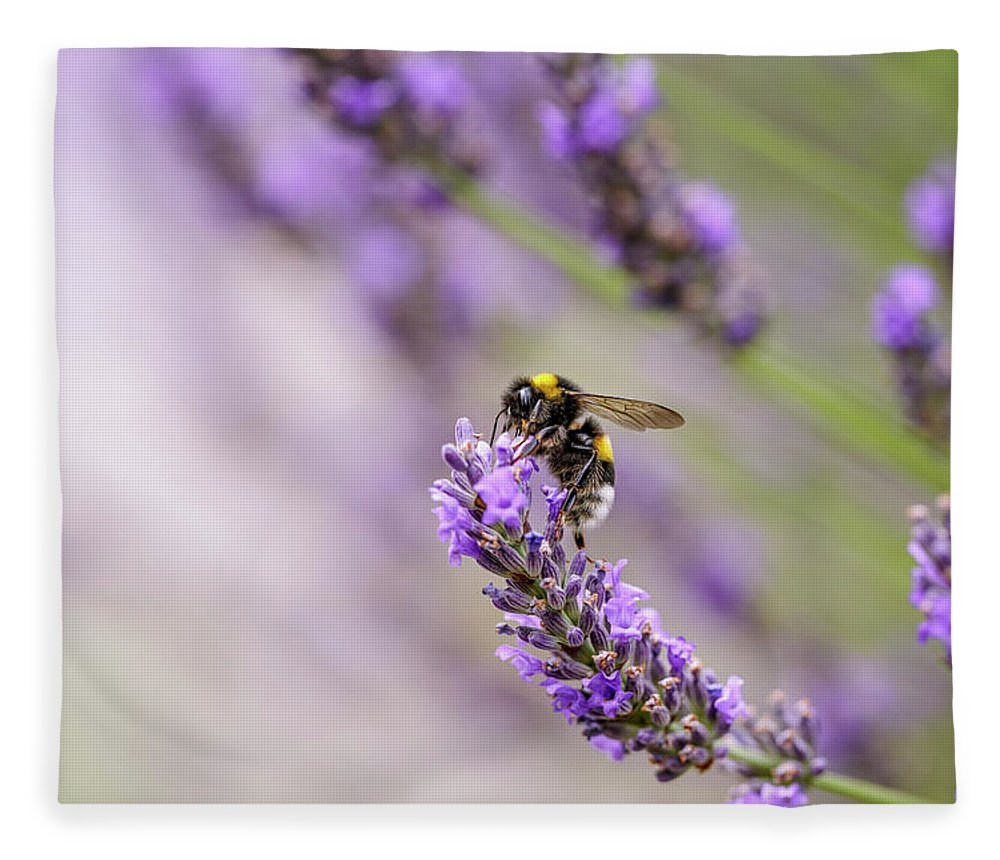 Lavender Fleece Blanket featuring the photograph Bumblebee and Lavender by Nailia Schwarz