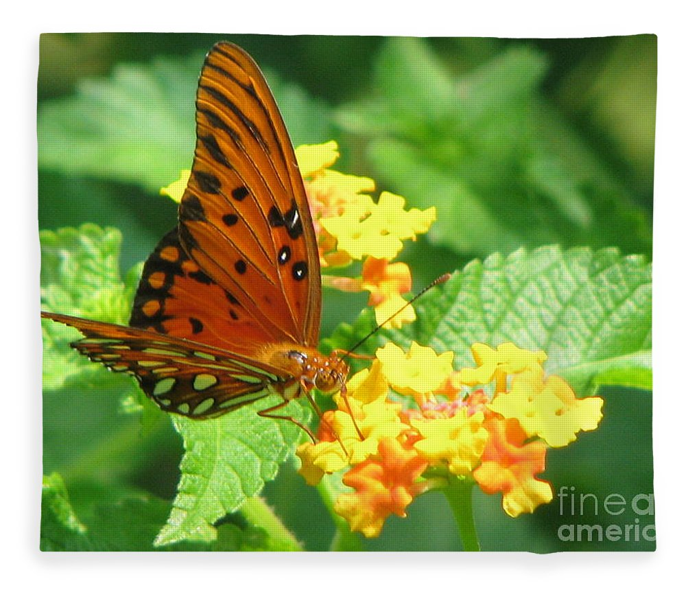 Butterfly Fleece Blanket featuring the photograph Butterfly by Amanda Barcon