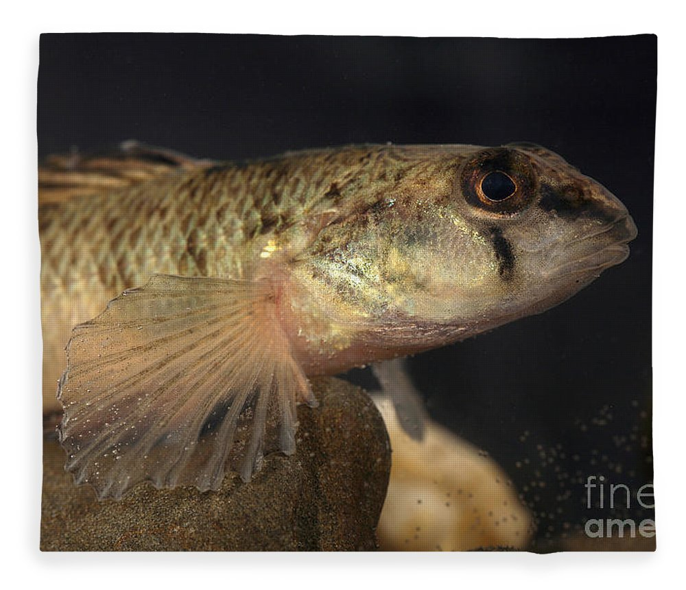 Animal Fleece Blanket featuring the photograph Mobile Logperch Percina Kathae by Ted Kinsman
