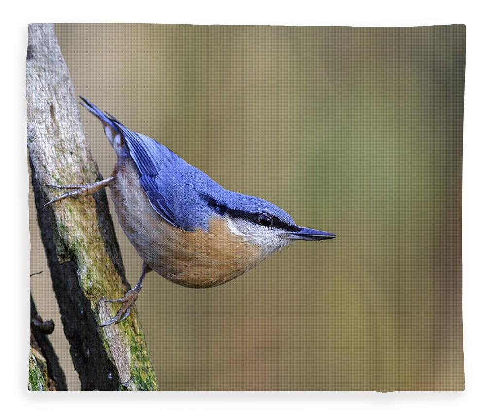 Animal Fleece Blanket featuring the photograph Nuthatch -- by Chris Smith