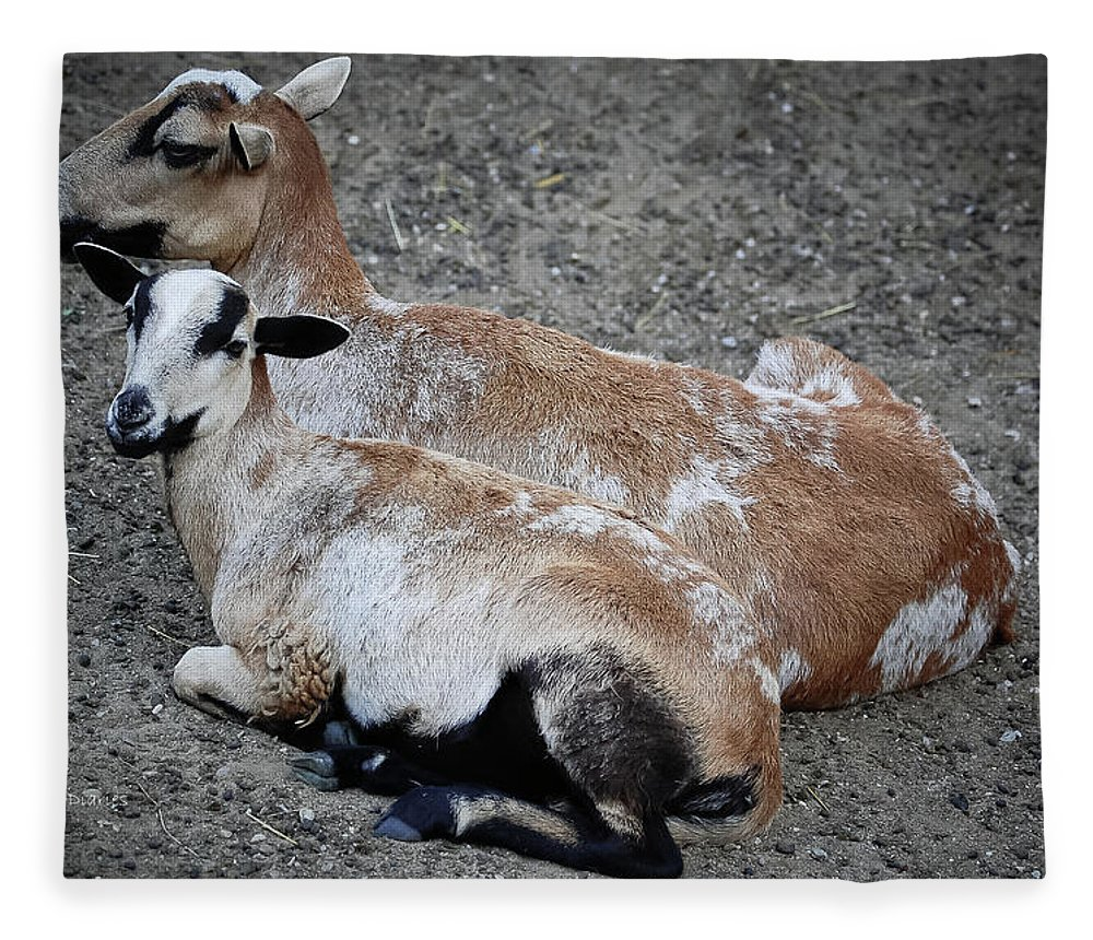 Goats Fleece Blanket featuring the photograph A Nanny And Her Kid by DigiArt Diaries by Vicky B Fuller