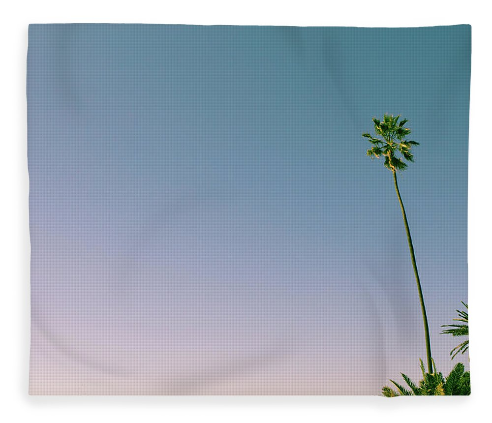 Palm Tree Fleece Blanket featuring the photograph A Palm On Its Own by Matthew Wolf