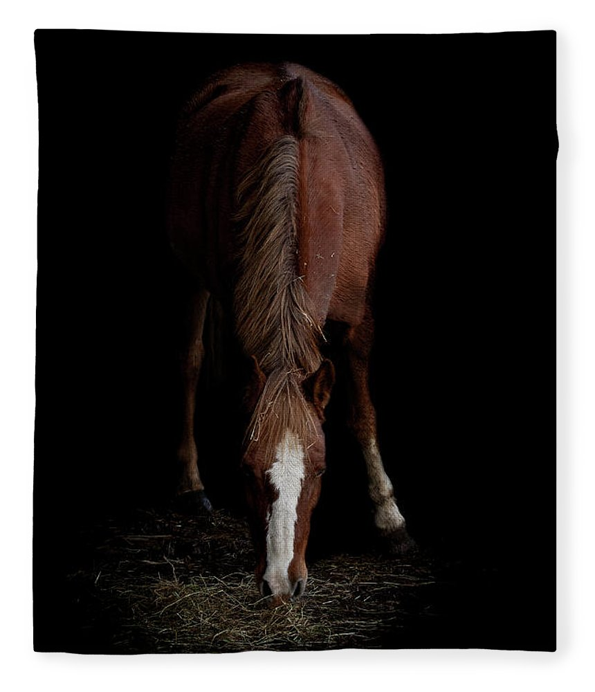Pony Fleece Blanket featuring the photograph Alfresco by Paul Neville