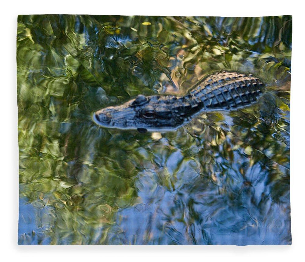 Alligator Fleece Blanket featuring the photograph Alligator stalking by Douglas Barnett