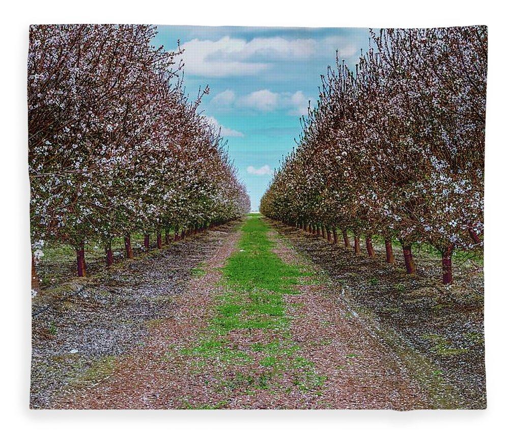 Thomas Gartner Fleece Blanket featuring the photograph Almond Trees Of Button Willow by Thomas Gartner