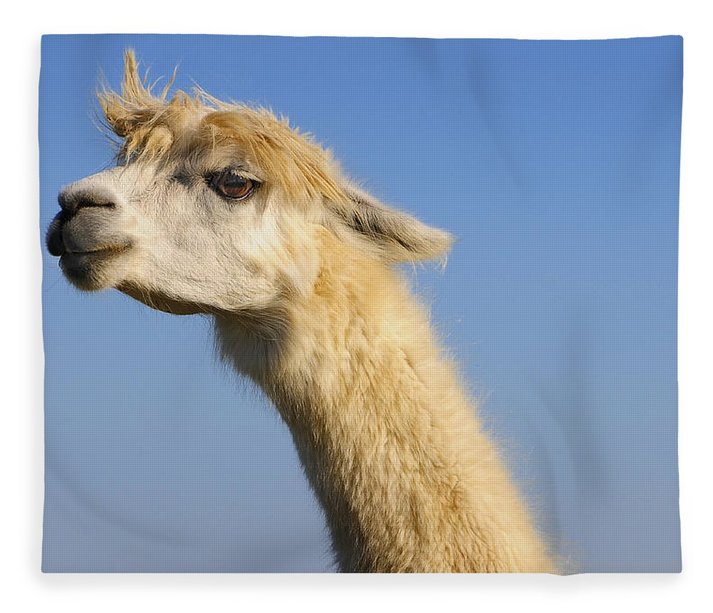 Skip Hunt Fleece Blanket featuring the photograph Alpaca by Skip Hunt