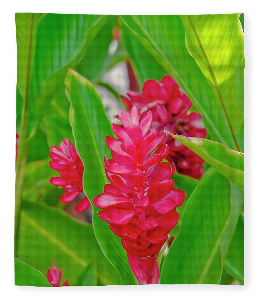 Alpinia purpurata jungle king red ginger tropical flowers lahaina alpinia purpurata fleece blanket featuring the photograph alpinia purpurata jungle king red ginger tropical flowers lahaina izmirmasajfo