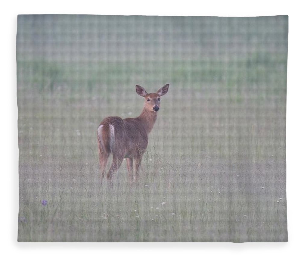 Deer Fleece Blanket featuring the photograph An Early Summer Morning by Michael Peychich