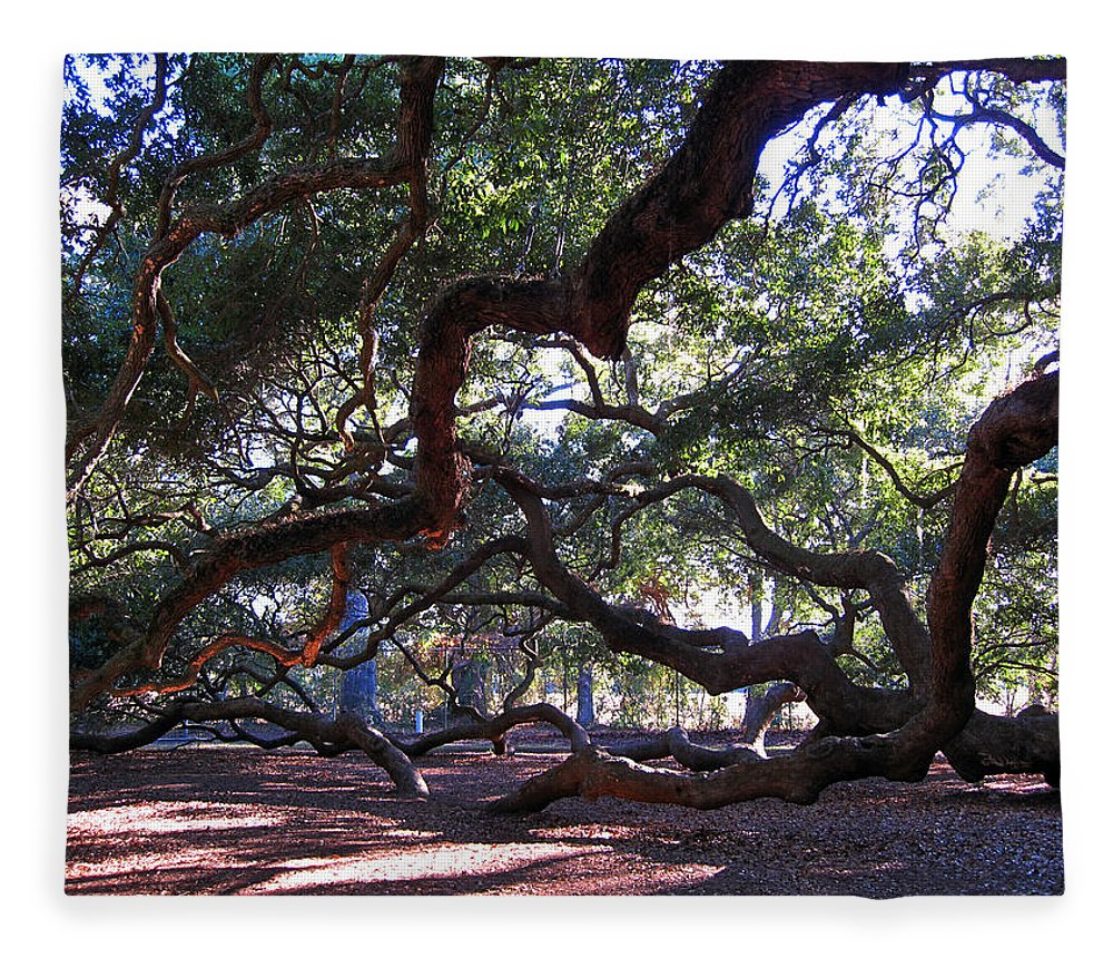 Photography Fleece Blanket featuring the photograph Angel Oak Side View by Susanne Van Hulst