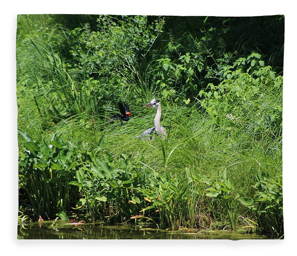 Marsh Fleece Blanket featuring the photograph Annoyed - Heron and Red Winged Blackbird 5 of 10 by Colleen Cornelius