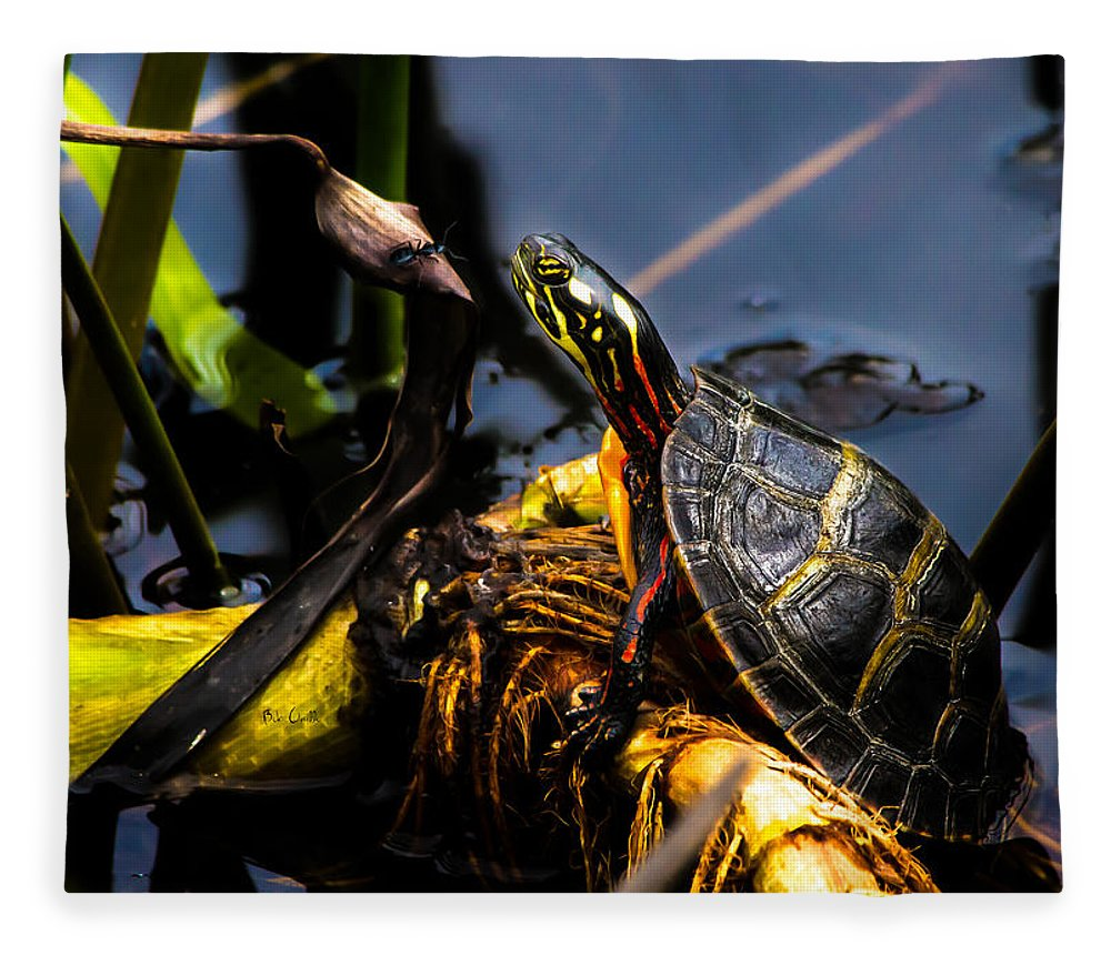 Turtles Fleece Blanket featuring the photograph Ant Meets Turtle by Bob Orsillo