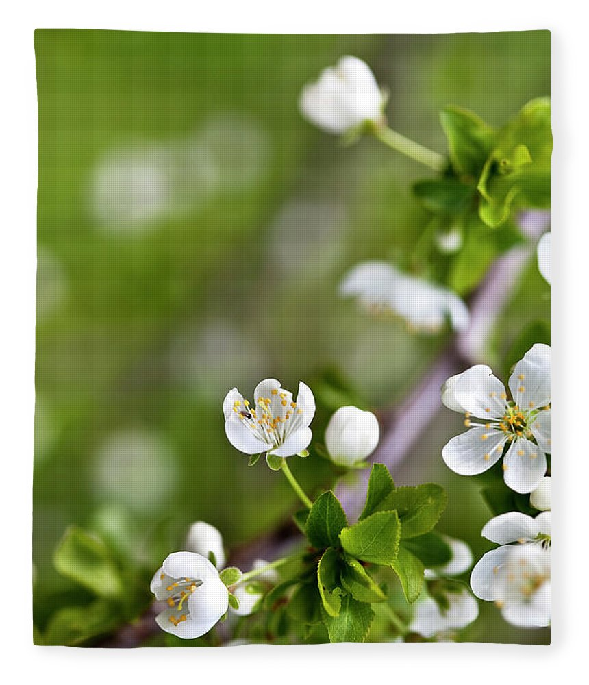 Apple Fleece Blanket featuring the photograph Apple Blossoms by Nailia Schwarz