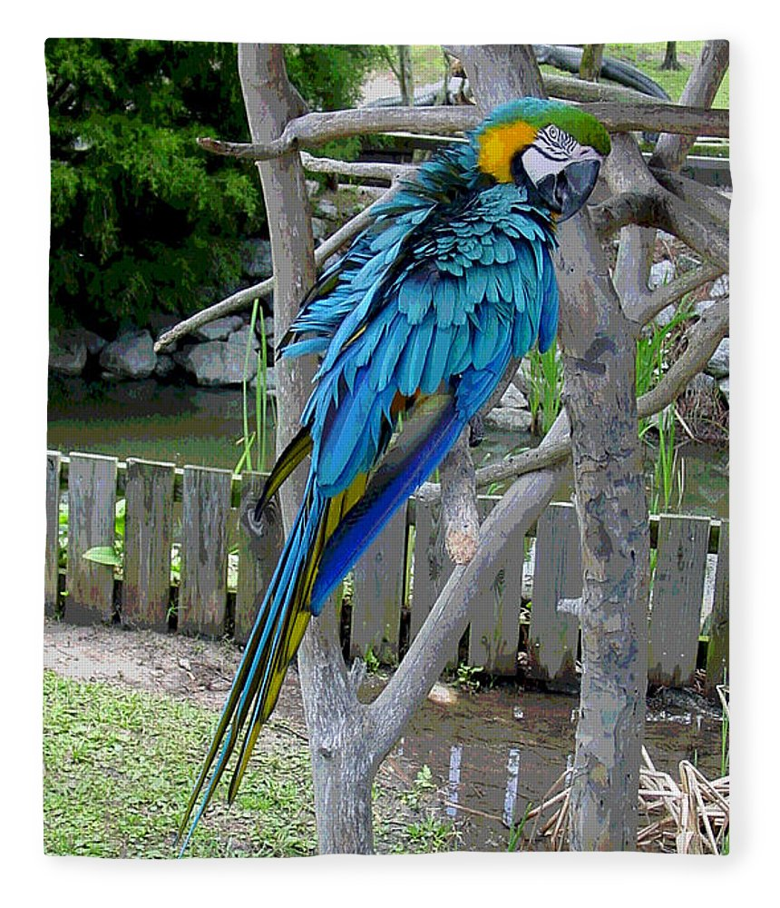 Blue Fleece Blanket featuring the photograph Arent I a Handsome Fellow - Blue and Gold Macaw by Suzanne Gaff