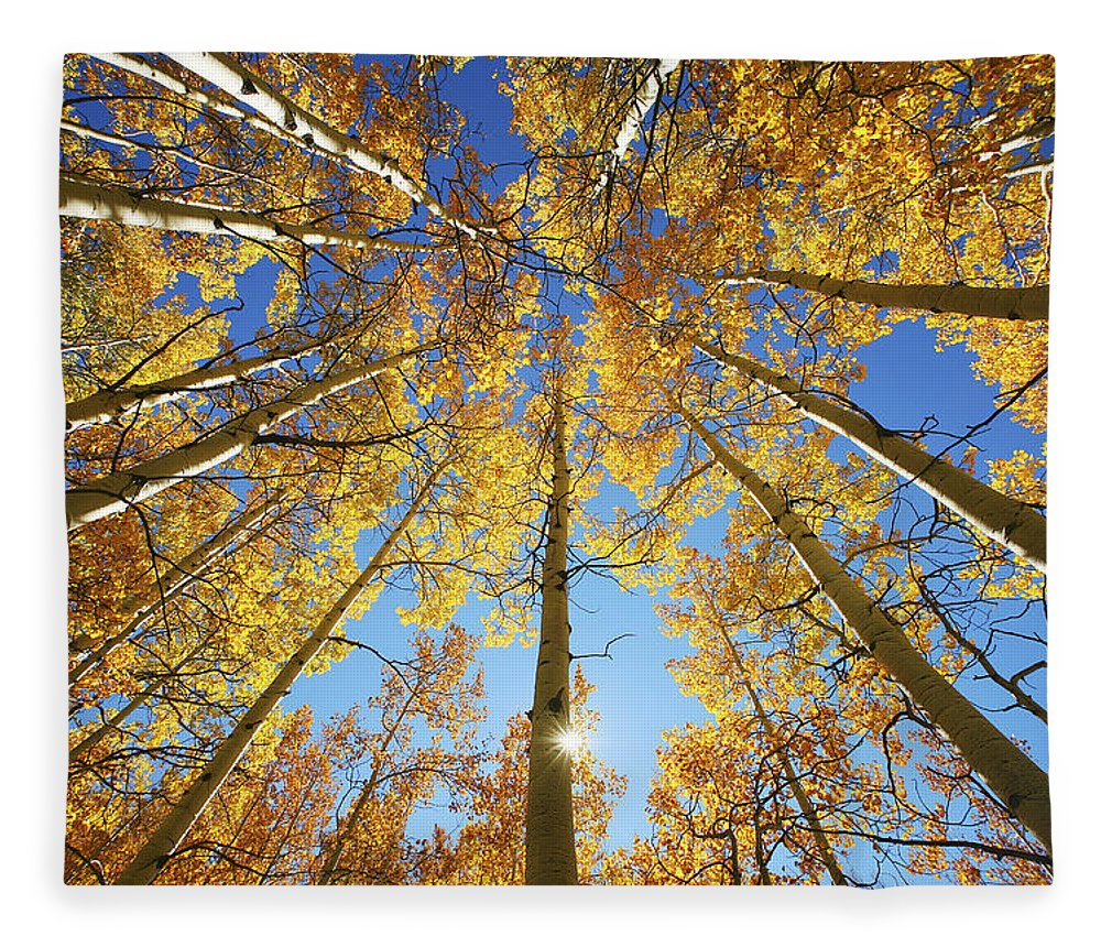 Aspen Fleece Blanket featuring the photograph Aspen Tree Canopy 2 by Ron Dahlquist - Printscapes