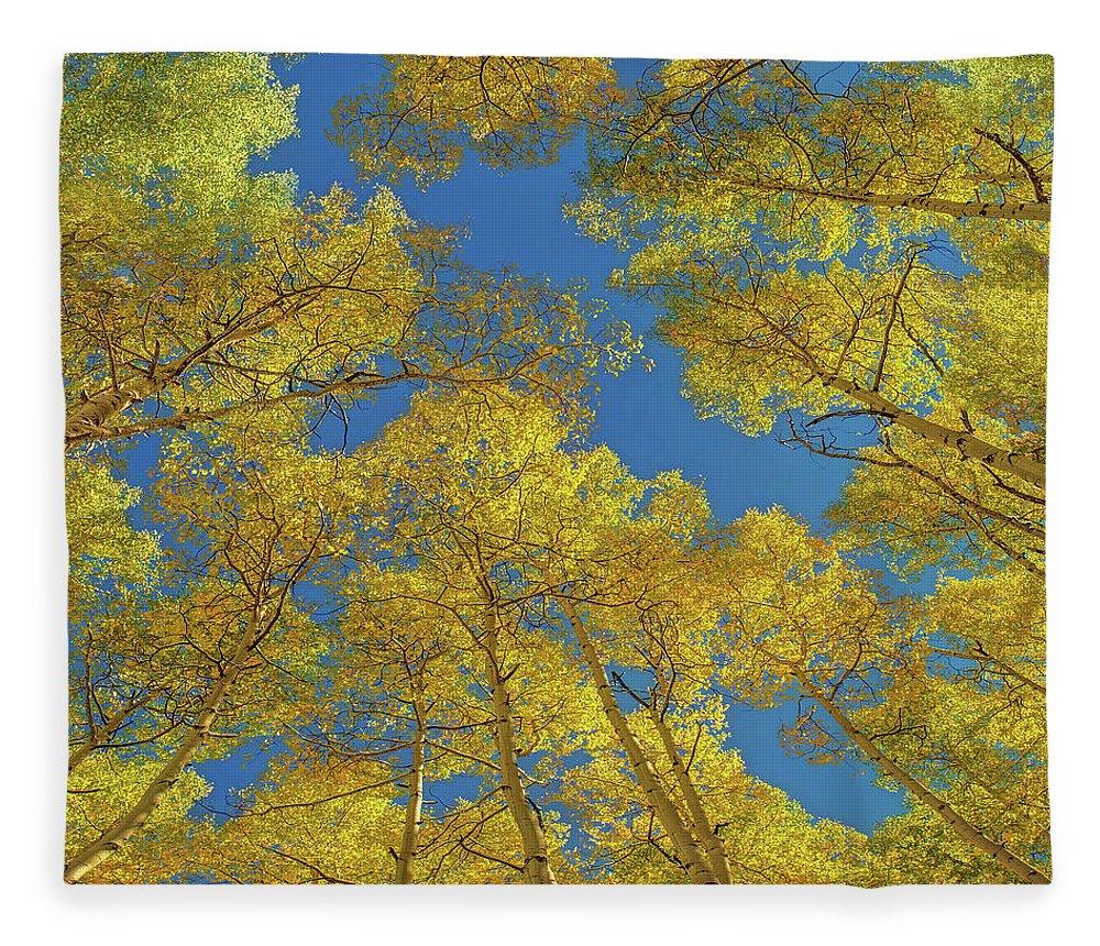 Aspen Trees Against Sky Fleece Blanket for Sale by Lena Owens OLena Art