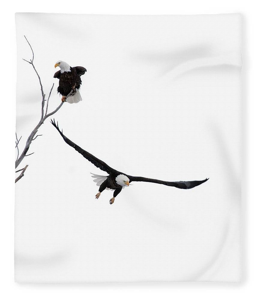 Bald Fleece Blanket featuring the photograph Bald Eagles by Gary Langley