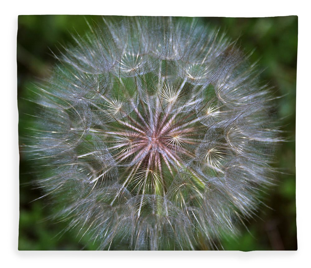 Dandelion Fleece Blanket featuring the photograph Big Wish by Linda Sannuti