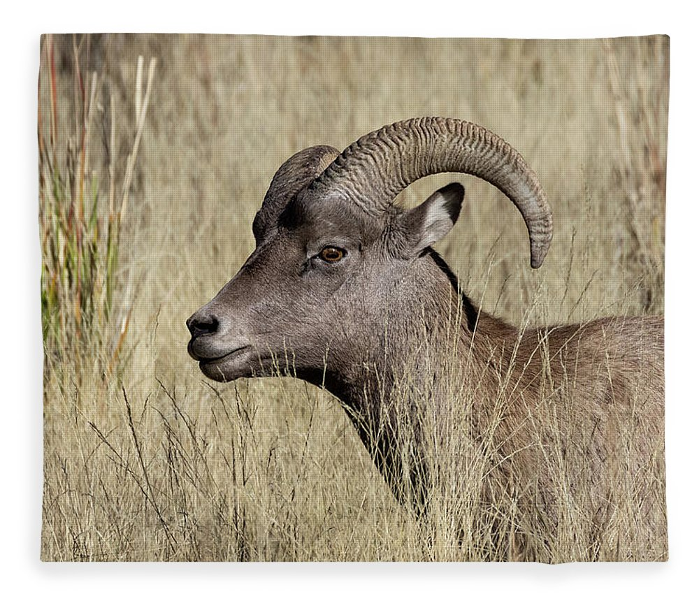 Fleece Blanket featuring the photograph Bighorn Ram Portrait by Kathleen Bishop
