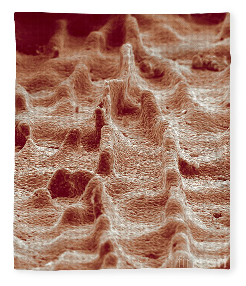 Science Fleece Blanket featuring the photograph Biomimicry, Ceramic Mimics Mother by Science Source