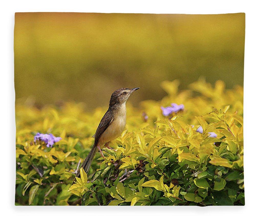 Bird Fleece Blanket featuring the digital art Bird in a Garden by Sandeep Gangadharan