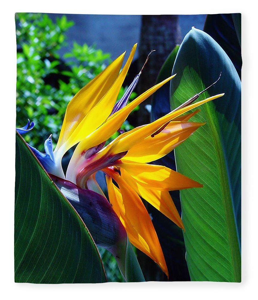 Flowers Fleece Blanket featuring the photograph Bird Of Paradise by Susanne Van Hulst