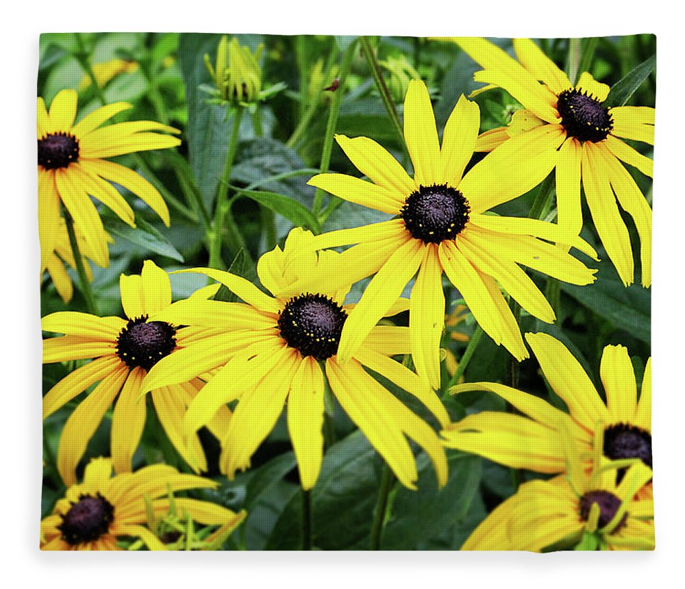 Daisies Fleece Blanket featuring the photograph Black Eyed Susans- Fine Art Photograph By Linda Woods by Linda Woods
